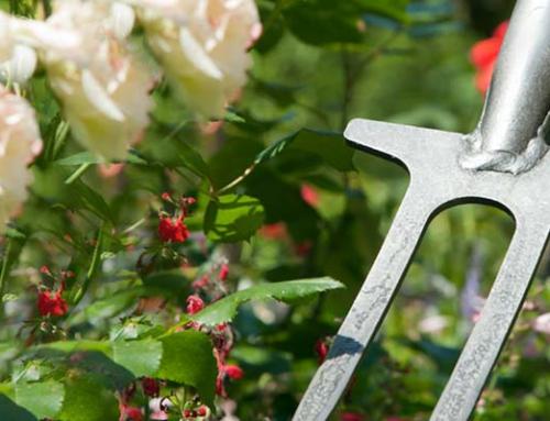Für schönste Rosen